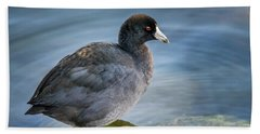 American Coot Beach Sheet