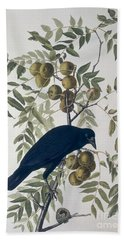 American Crow Beach Sheet by John James Audubon