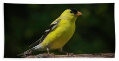 American Goldfinch Male Beach Towel