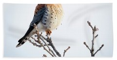 Beach Towel featuring the photograph American Kestrel At Bender by Ricky L Jones