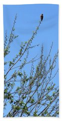 American Kestrel Atop Pecan Tree Beach Towel