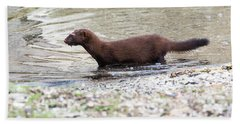 Beach Sheet featuring the photograph American Mink by Ricky L Jones