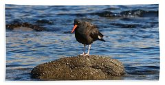 American Oystercatcher - 2 Beach Towel