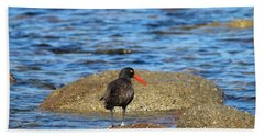 American Oystercatcher  Beach Towel