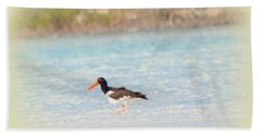 American Oystercatcher Beach Sheet