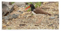 Beach Towel featuring the photograph American Oystercatcher by Kristia Adams