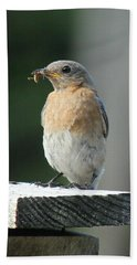 American Robin Beach Sheet