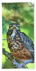 Beach Towel featuring the photograph American Robin Fledgling by Debbie Stahre