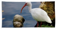 American White Ibis Beach Towel