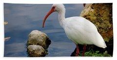 American White Ibis Beach Sheet