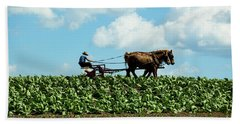 Amish Farmer With Horses In Tobacco Field Beach Sheet
