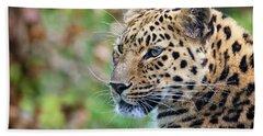 Amur Leopard Portrait Beach Sheet