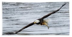 An Eagles Catch 12 Beach Towel by Brook Burling
