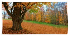 An Old Maple Tree In Autumn Color Beach Sheet