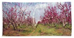 An Orchard In Blossom In The Golan Heights Beach Towel