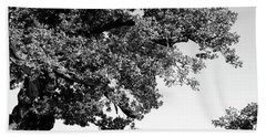 Ancient Oak, Bradgate Park Beach Towel