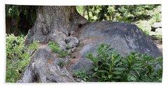 Ancient Tree On A Rock Beach Sheet