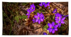 Anemone Hepatiea #g3 Beach Sheet by Leif Sohlman
