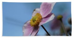 Anemone Tomentosa Flower Beach Sheet