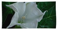 Angel Trumpet Opening Beach Towel