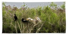 Anhinga Family Beach Towel