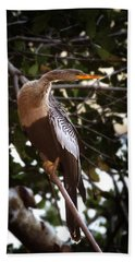 Anhinga Water Fowl Beach Towel