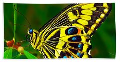 Anise Swallowtail Butterfly Beach Towel