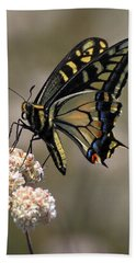 Anise Swallowtail Beach Towel