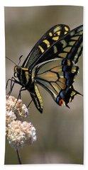 Anise Swallowtail Beach Sheet