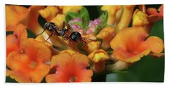 Beach Towel featuring the photograph Ant On Plant  by Richard Rizzo