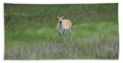 Prong Horned Antelope Lake John Swa Co Beach Towel