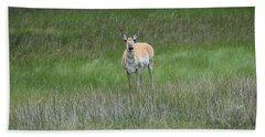Prong Horned Antelope Lake John Swa Co Beach Sheet