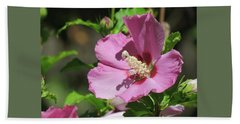 Aphrodite Rose Of Sharon Hibiscus -  Floral - Macro Photography Beach Sheet