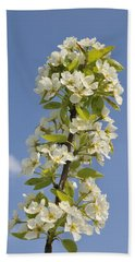 Apple Blossom In Spring Beach Sheet by Matthias Hauser