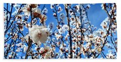 Beach Sheet featuring the photograph Apricot Blossoms by Glenn McCarthy Art and Photography
