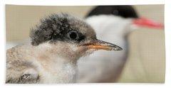 Beach Towel featuring the photograph Arctic Tern Chick With Parent - Scotland by Karen Van Der Zijden