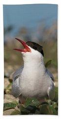 Arctic Tern - St John's Pool, Scotland Beach Sheet
