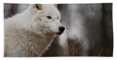Arctic Wolf Pictures 1242 Beach Towel
