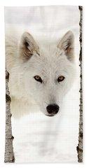 Arctic Wolf Seen Between Two Trees In Winter Beach Towel