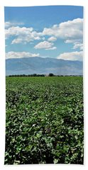 Arizona Cotton Field Beach Towel