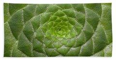 Artistic Nature Green Aeonium Cactus Macro Photo 203 Beach Sheet
