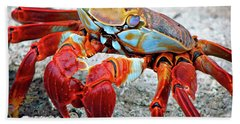 Artistic Nature Red And Blue Rainbow Crab 908 Beach Sheet