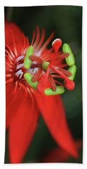 Passiflora Vitifolia Scarlet Red Passion Flower Beach Towel by Sharon Mau