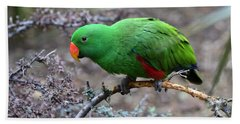 Green Male Eclectus Parrot Beach Towel
