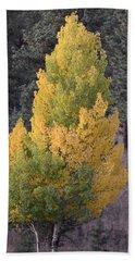 Aspen Tree Fall Colors Co Beach Towel
