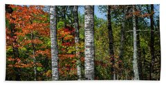 Beach Towel featuring the photograph Aspens In Fall Forest by Elena Elisseeva