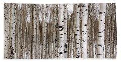 Aspens In Winter Panorama - Colorado Beach Sheet by Brian Harig
