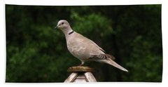 At The Top Of The Bird Feeder Beach Towel by Donna Brown