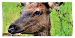 Attentive Yearling Beach Towel