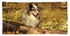 Austrailian Shepherd In Autumn Leaves Beach Towel